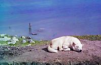 Собака спит на берегу