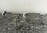 Детский труд на ферме