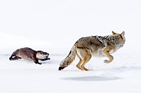 Неудачная охота_7