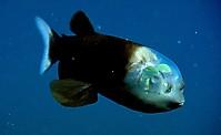 Причудливые рыбы_10