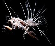 Причудливые рыбы_8